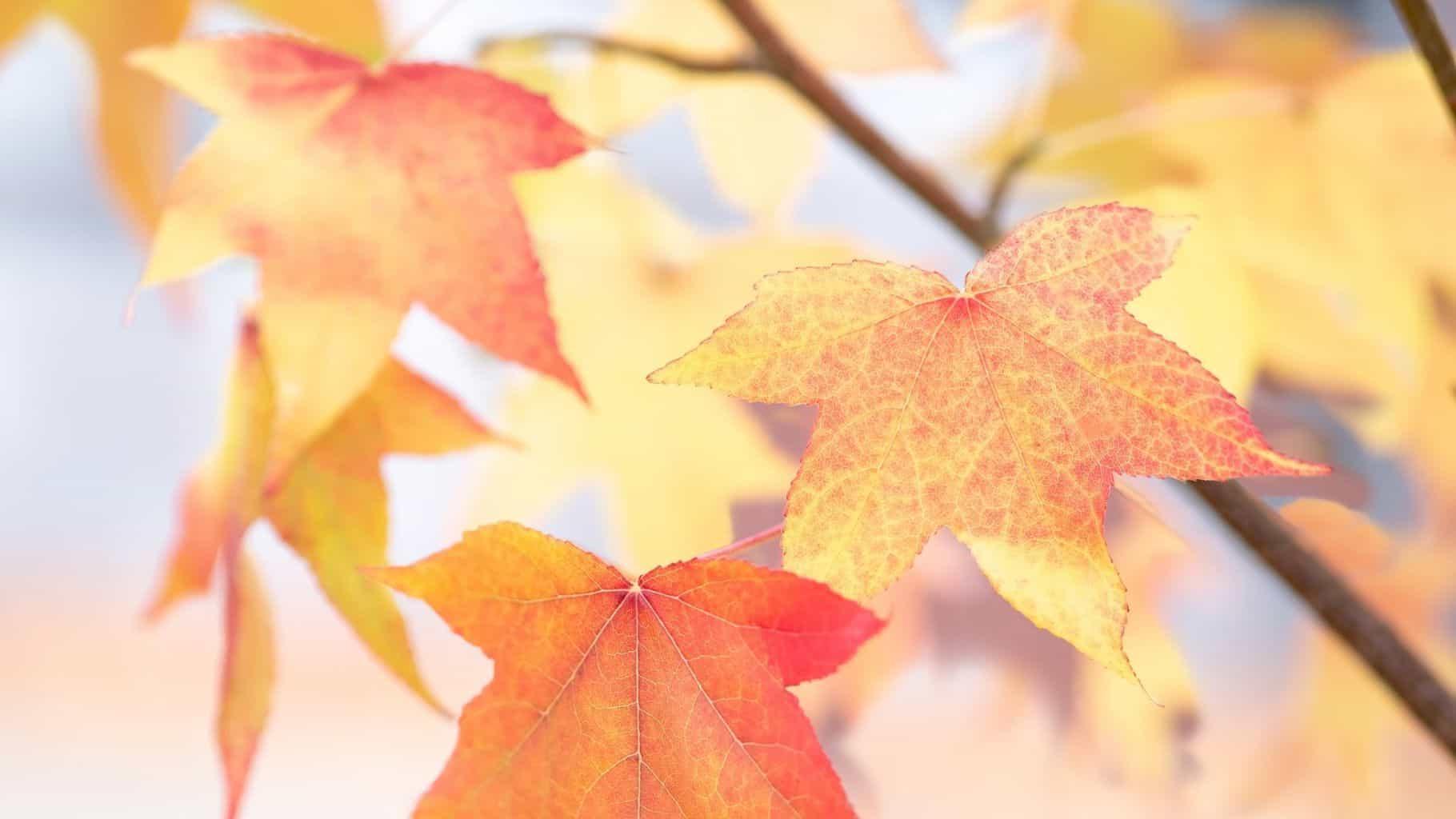 November: Der Freunde Salon macht Pause